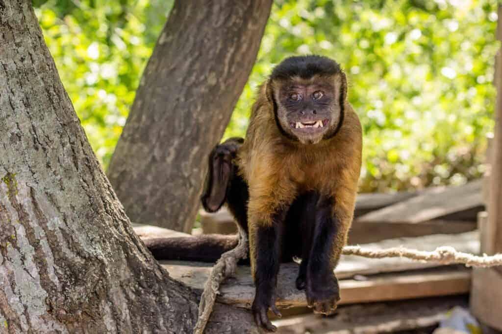 Kleiner Affe auf einem Baumstamm