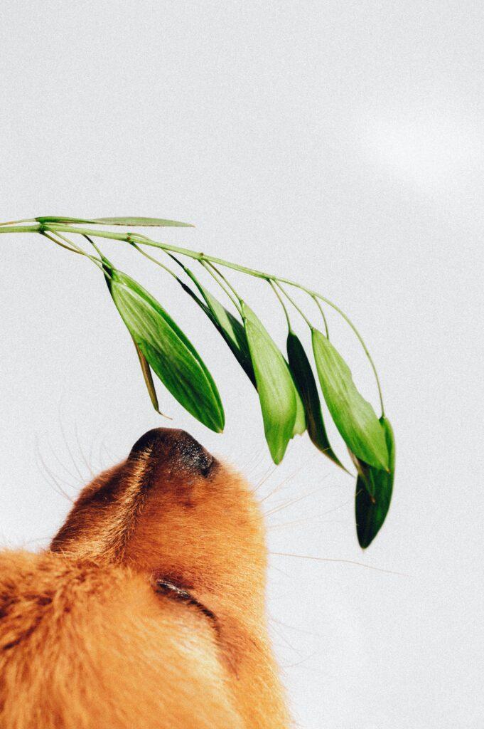 Hund riecht an Pflanze